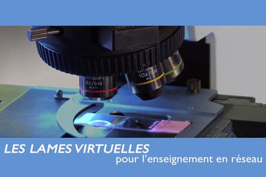 Les lames microscopiques virtuelles pour l'enseignement médical en réseau