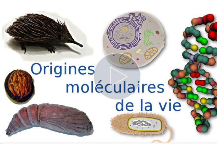 MOOC Les origines moléculaires de la vie