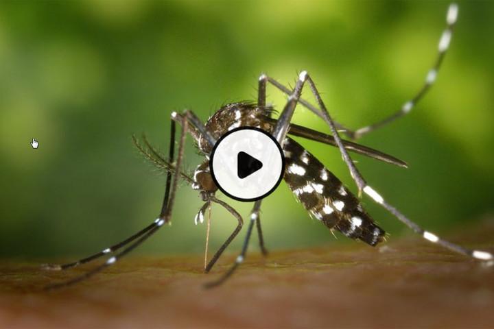 MOOC Contrôler une épidémie de maladies infectieuses émergentes (session 3)