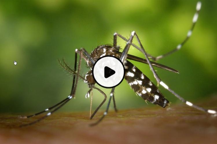 MOOC Contrôler une épidémie de maladies infectieuses émergentes