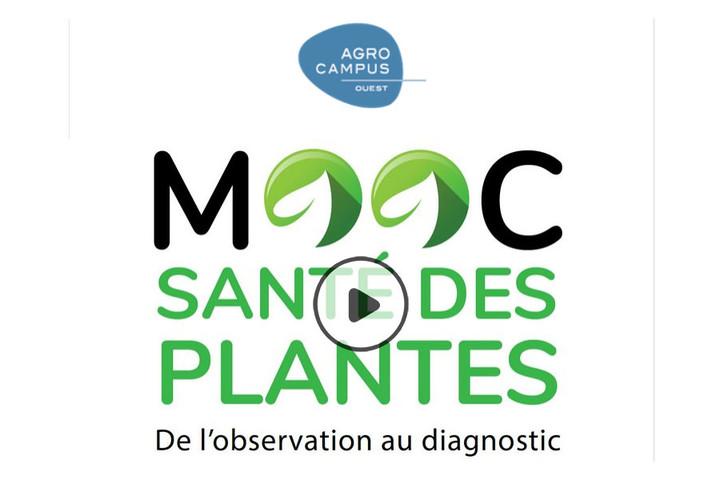 MOOC Santé des plantes : de l'observation au diagnostic