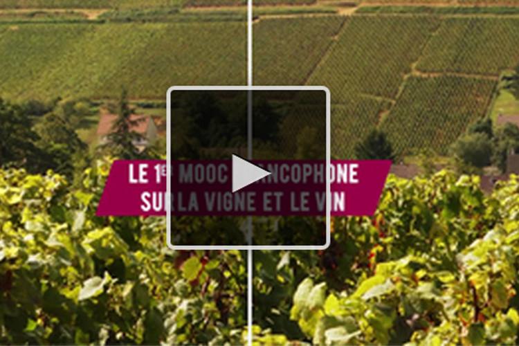 MOOC Open Wine University - Université de la vigne et du vin pour tous